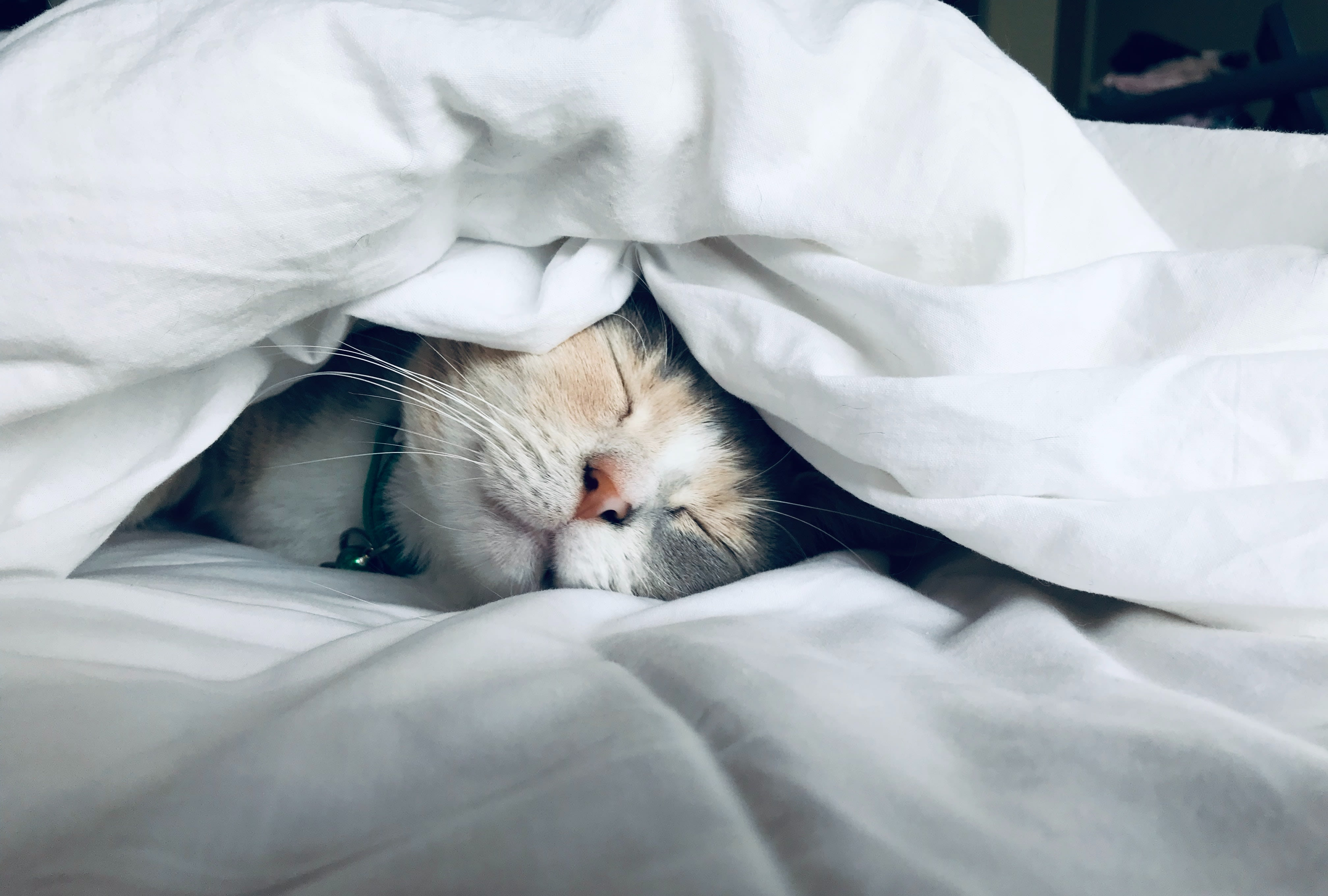 Best Bed Warmers for Cats - Cozy and Comfortable