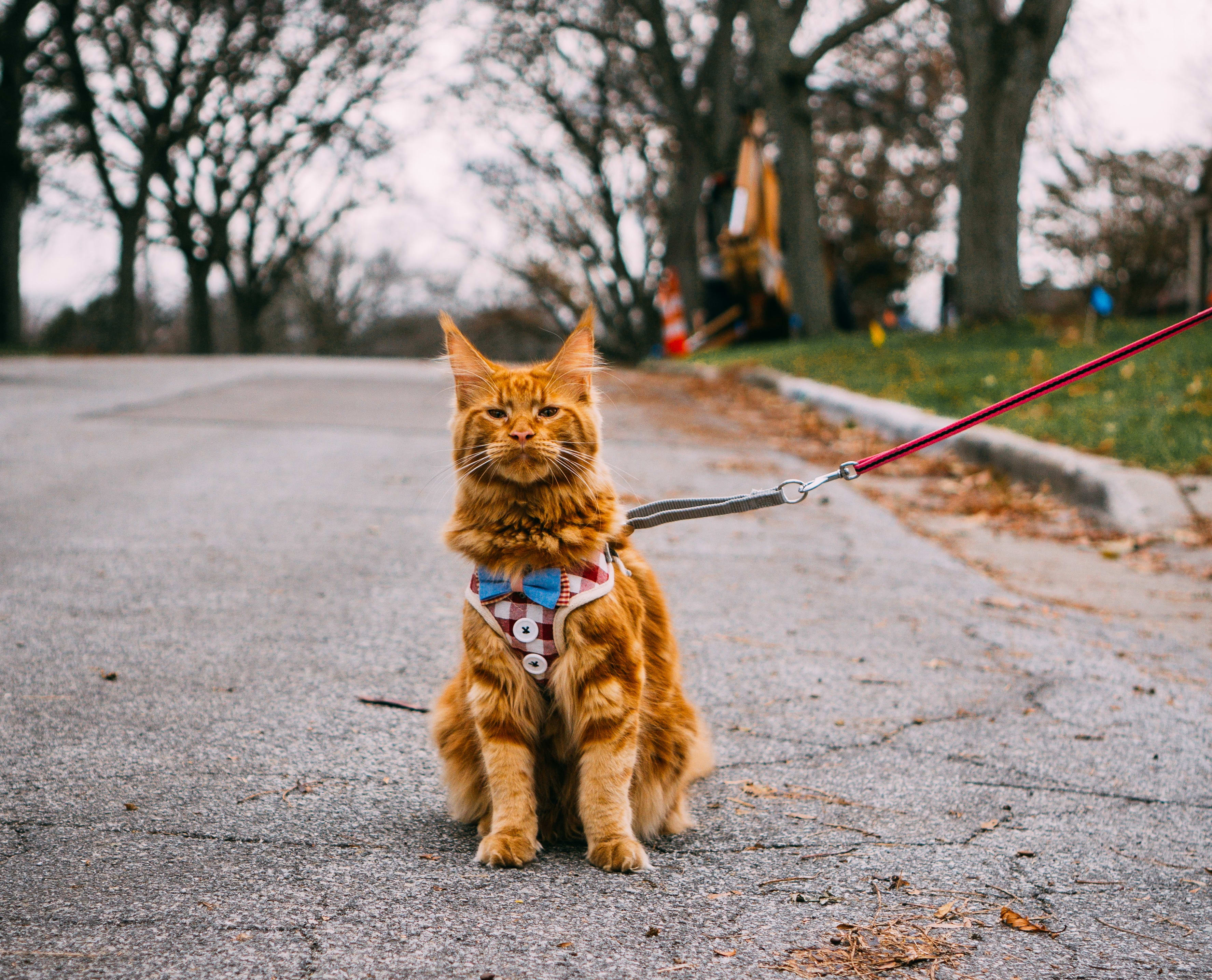 Best Cat Harness No Escape (Who's Going to Win?)
