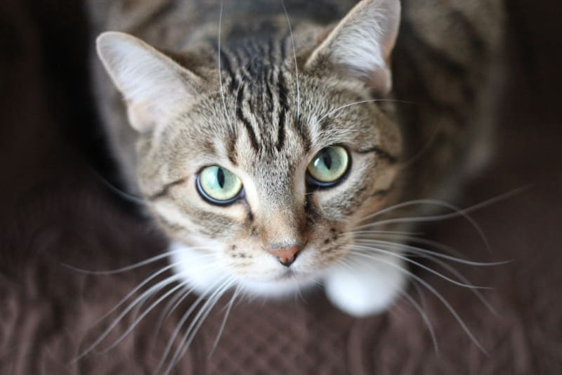 What To Do When Cat Throws Up Hairballs