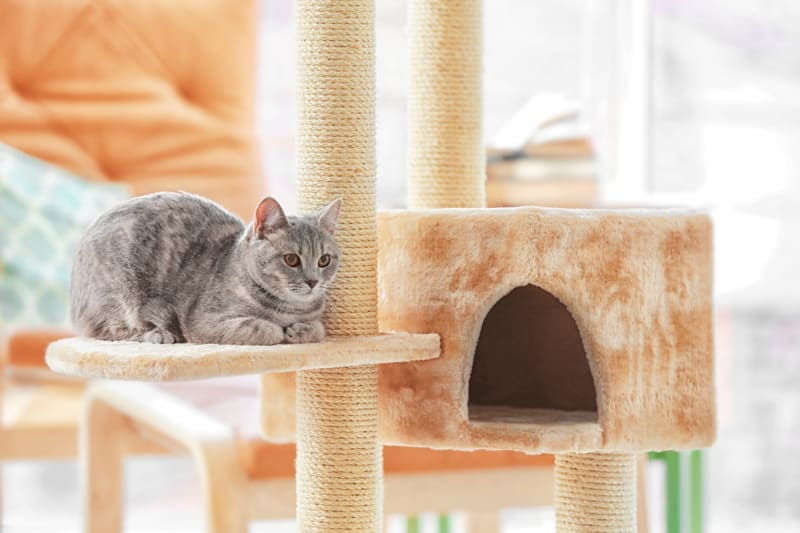 How To Re-carpet a Cat Tree
