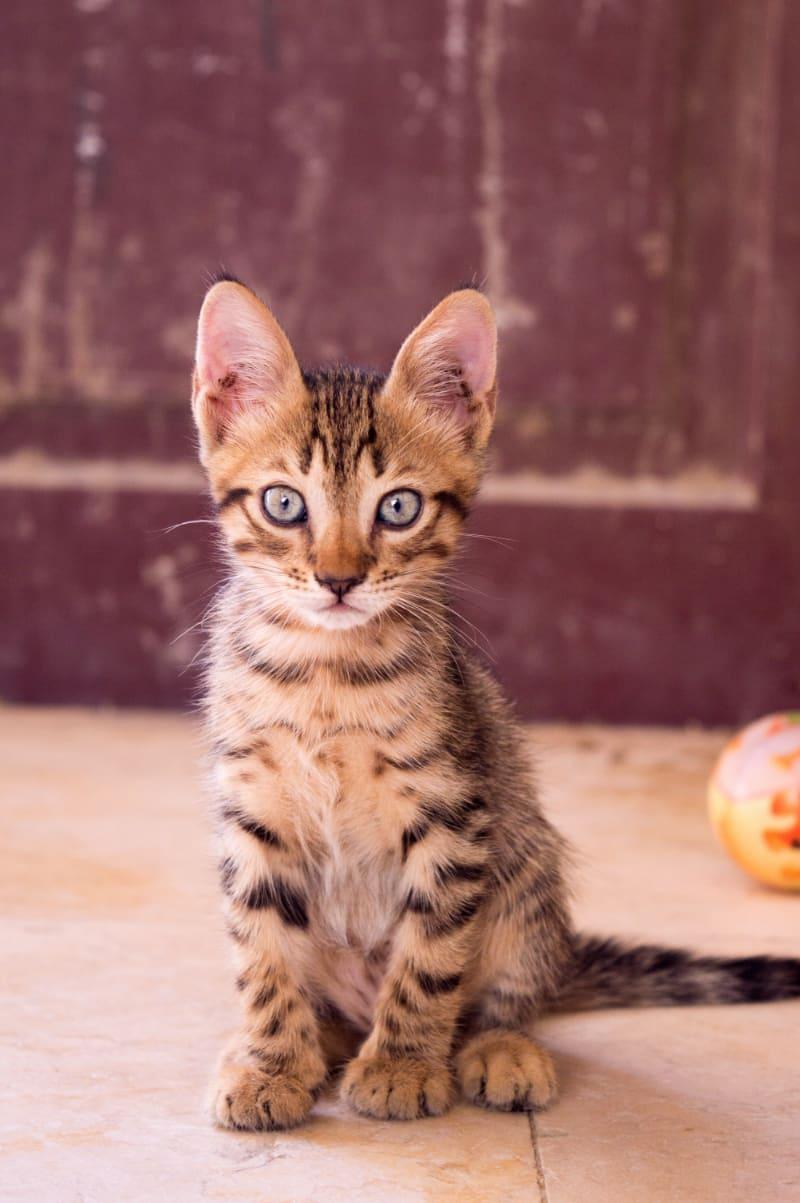 Best Scratch Pads & Mats for Cats