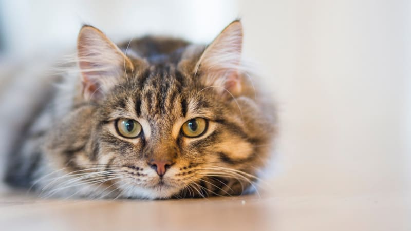 SmartCat Bootsie's Three-in-One Cat Scratcher Review