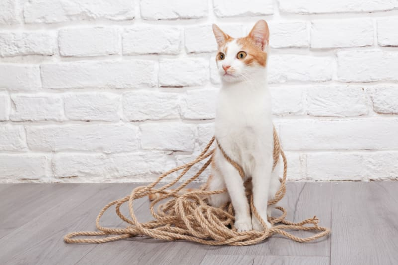 What Size Sisal Rope Do You Need For Your Scratching Post