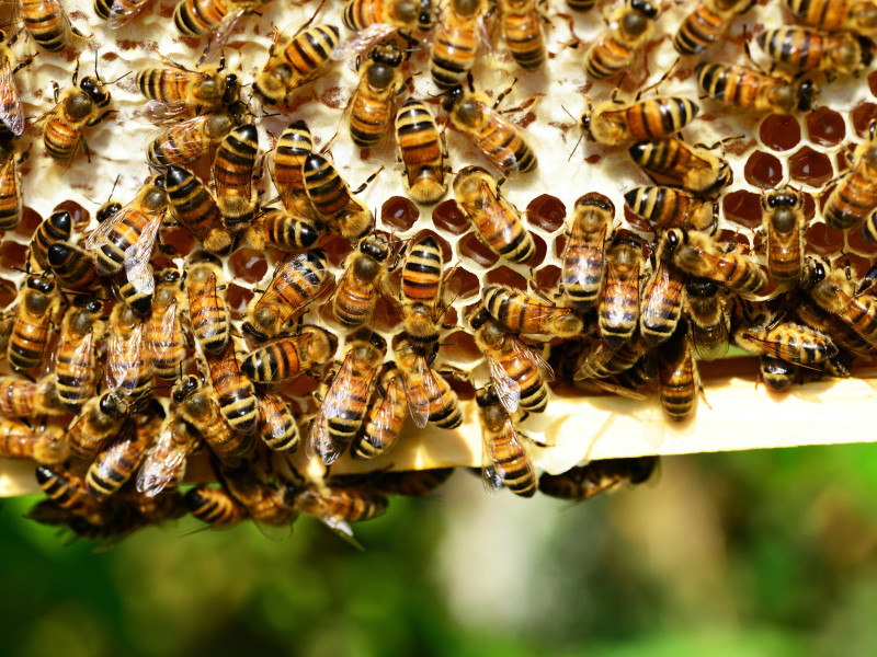 What bees can teach us about democracy