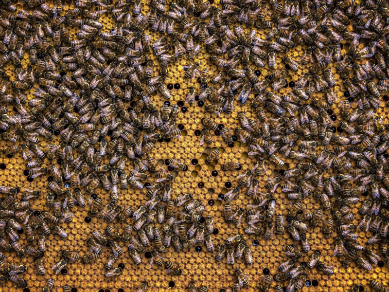 The rise of bee activism – how these humble insects have inspired a mass movement