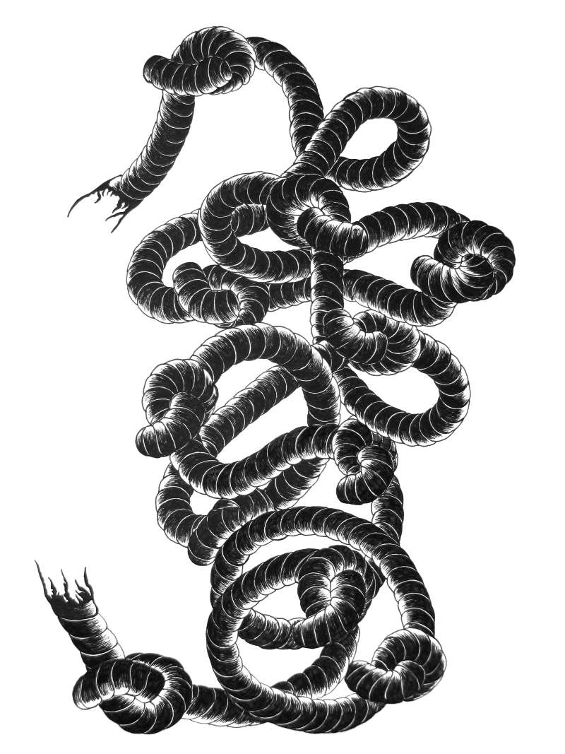 Ink drawing of rope and knots from the zine Knots.