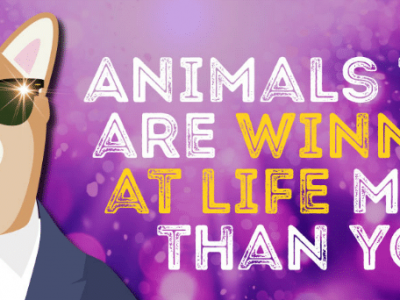 Animals that are winning at life more than you