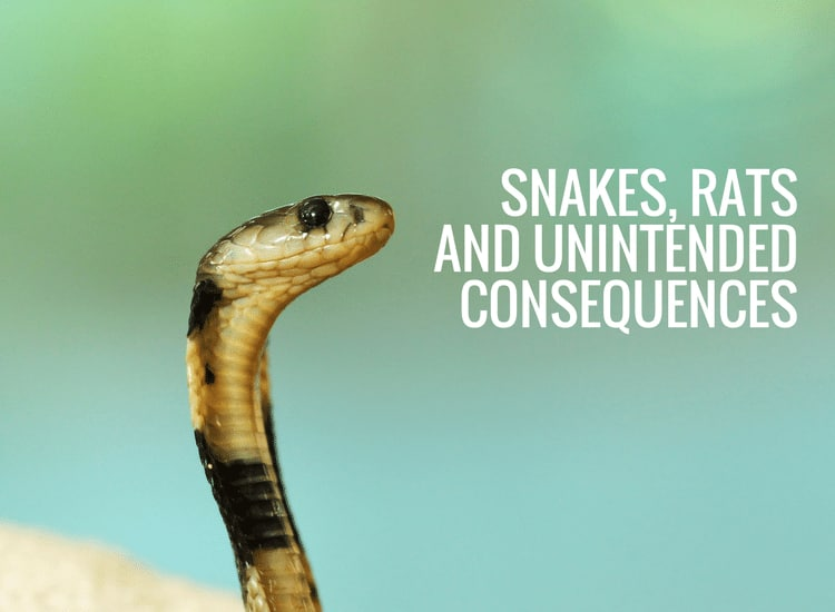 Snakes, Rats and Unintended Consequences and the proposed energy cap