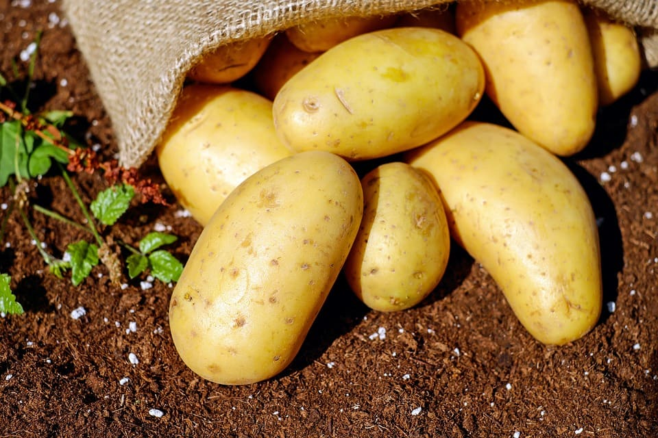 potato wastage reached 720 thousand tonnes a year