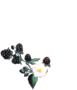 Inns at Blackberry Common