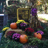 Lion And Rose Bed And Breakfast Directions