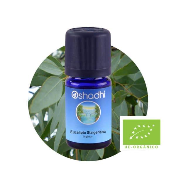 Eucalipto Staigeriana - Óleo Essencial Orgânico - 5ml