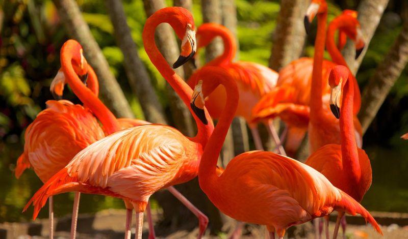 Flamingo Gardens: Everglades Eco Tour: Encounter Wildlife in the Wetlands
