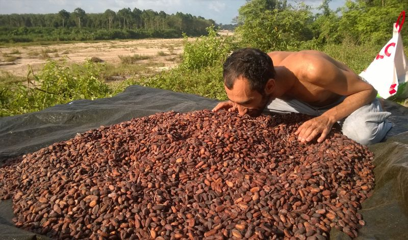 Kalos Funds: Nakhon Si Thammarat Discovery Tour: Cacao Farming and Sustainability
