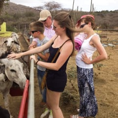 caring for donkeys