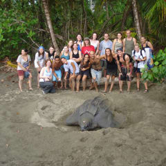 LAST Costa Rica turtle tours
