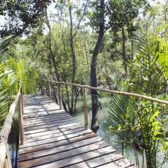 bamboo boardwalk - mangrove forest