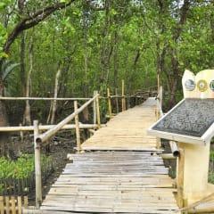 bamboo boardwalk hiking tours