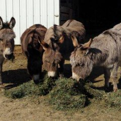 Aruba tours - feeding donkeys