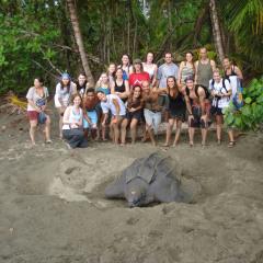 LAST Costa Rica turtle tours