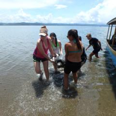 save the sea turtles LAST Costa Rica