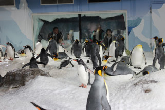 Penguin Discovery at Kelly Tarlton's Aquarium - Adult