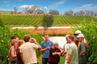 Wine Tasting and Lunch In The Yarra Valley