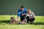 Meet a Cheetah and the National Zoo