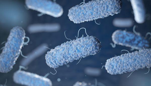 Salmonella is common
