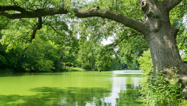 Stopping the Spread of Harmful Algae Blooms