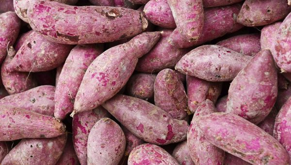 Eat This Tuber for a Normal Blood Sugar Range