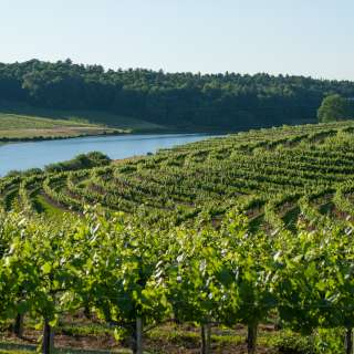 Vineyard Harvest Celebration