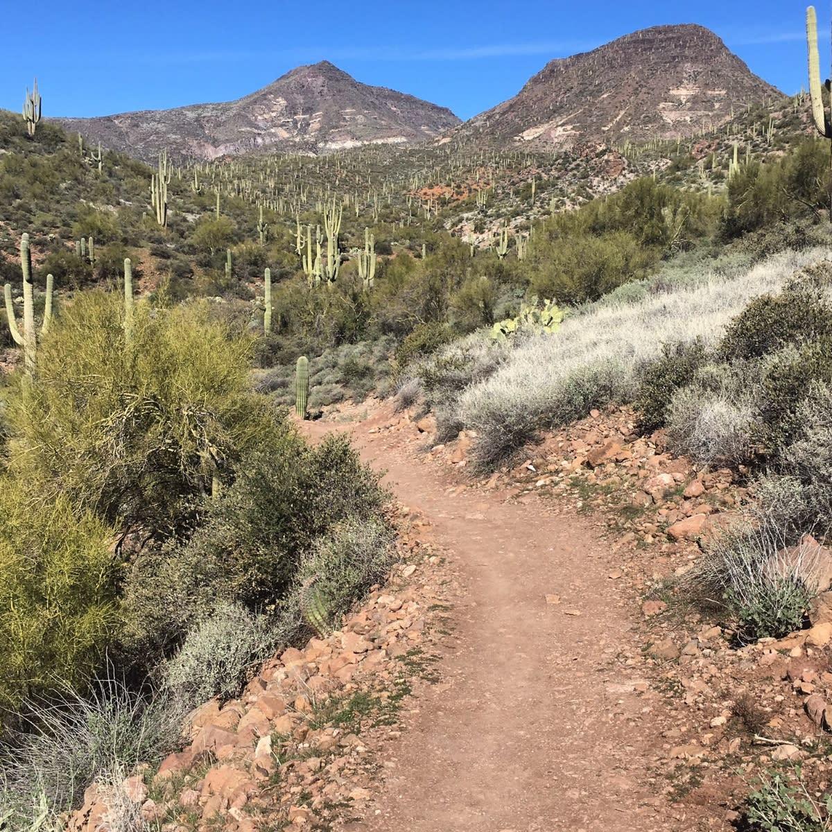 Dragonfly Trail