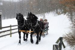 Horse-Drawn Sleigh Ride, Nemacolin Woodlands Resort