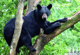Topeka Zoological Park