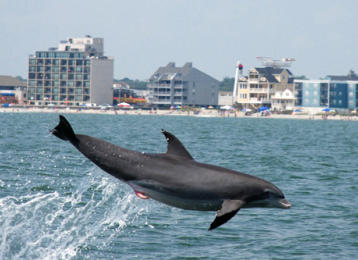 Myrtle Beach Activities | Blue Wave Dolphin Watch
