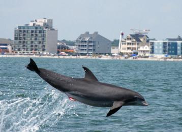 Myrtle Beach Activities | Blue Wave Dolphin Watch
