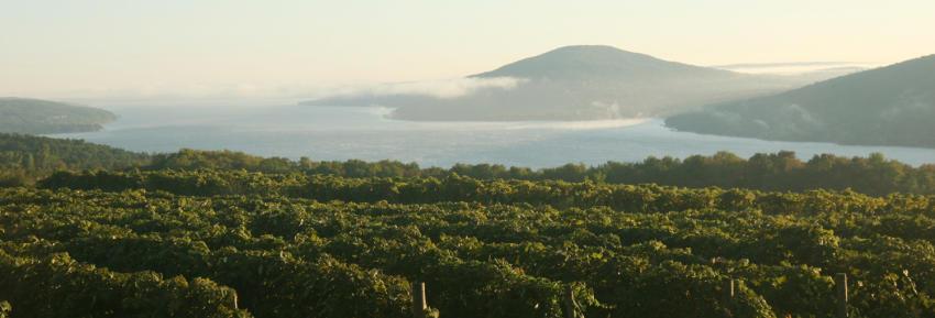 finger-lakes-canandaiugua-lake-scenic-vineyards-fog