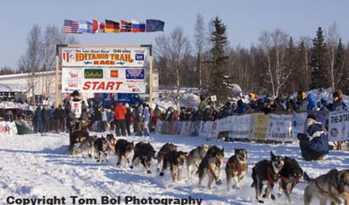 Iditarod start willow