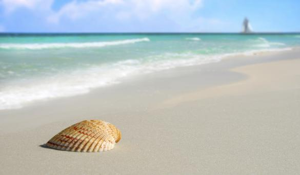 Perdido Key seashell