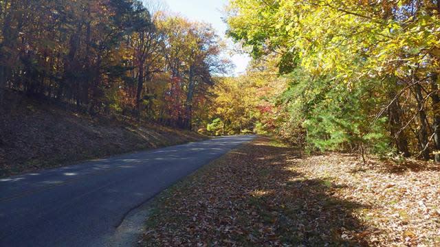 Roanoke Mountain Picnic Area - Fall Photo