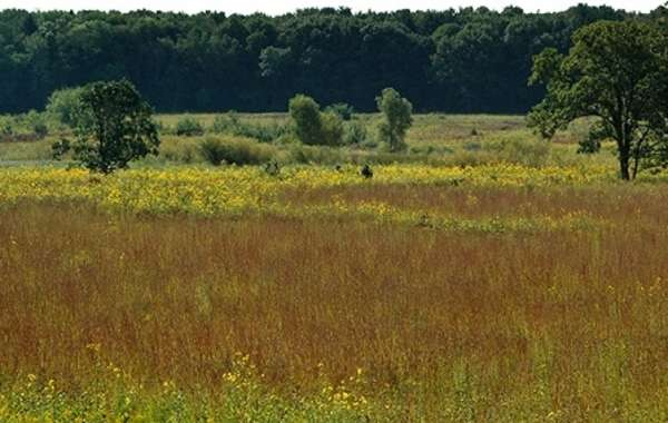 Ecological Restoration Work Party: Core Area and Curtis Prairie.