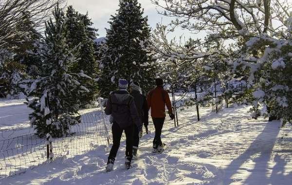 UW-Madison Arboretum Family Nature Program:  Patterns in Winter Trees.