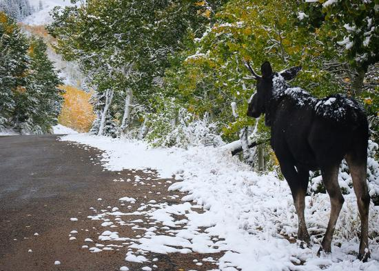 First Snow Blog Image