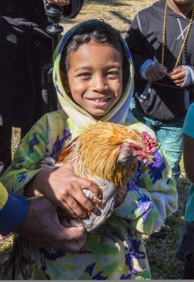 Iowa Chicken Run - Photo by Yvette Cardozo