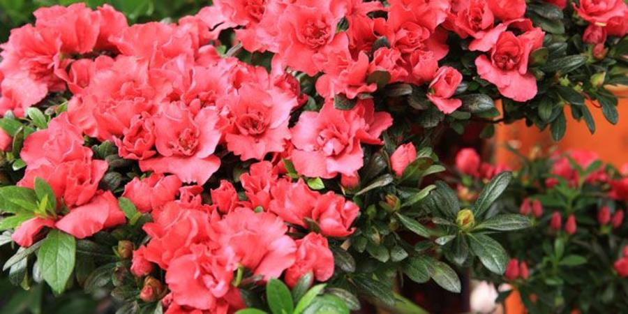 Waddell Botanical Gardens