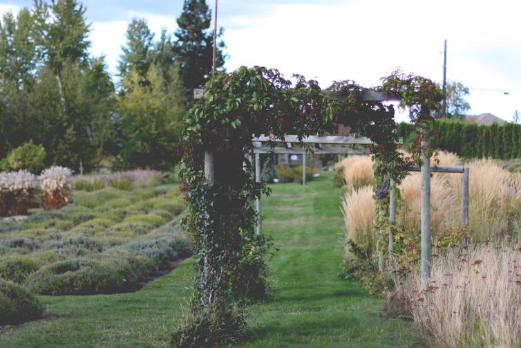 Gardens at Okanagan Herb and Lavender Farm