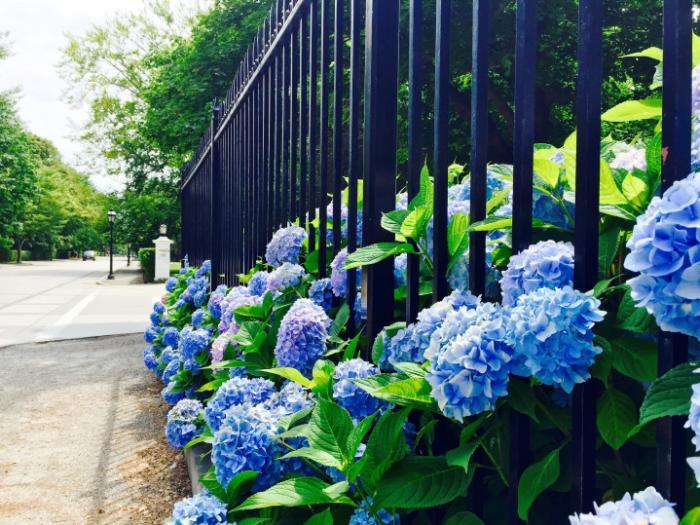 Bellevue Avenue, Newport