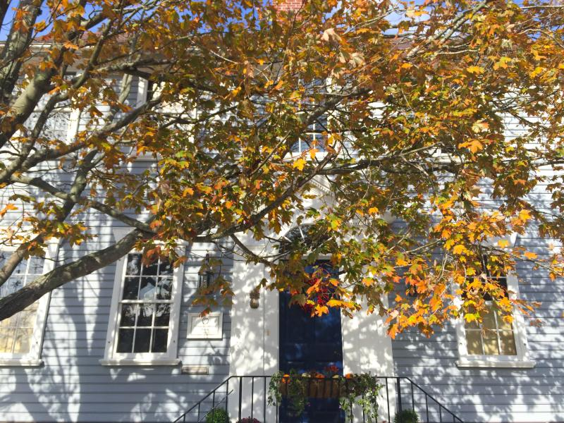 fall-tree-historic-home_credit-discover-newport-3484.jpg