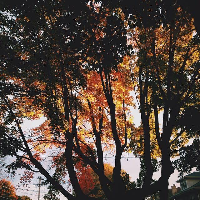 Fall Trees in Roanoke - Fall Photo